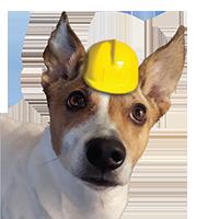 roof installation dog