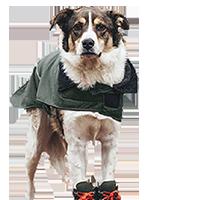 residential dog