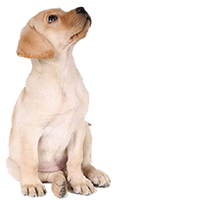 skylights dog