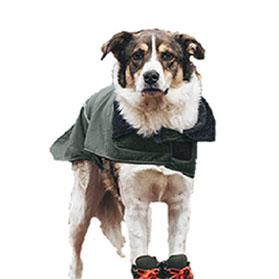 Gutters Dog