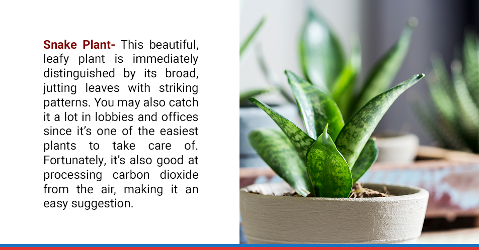 Snake Plant-This beautiful, leafy plant is immediately distinguished by its broad, jutting leaves with striking patterns. You may also catch it a lot in lobbies and offices since it's one of the easiest plants to take care of. Fortunately, it's also good at processing carbon dioxide from the air, making it an easy suggestion.
